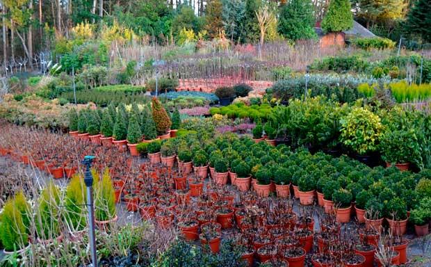 La diputaci n de zamora repartir plantas forestales for Plantas forestales