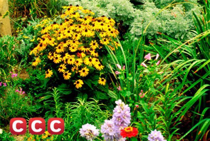 Curso de jardiner a profesional a distancia agencia de for Aprender jardineria