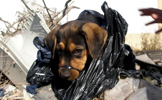 agencia perra paseo