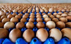 Bélgica obligará a los responsables de los huevos contaminados a…